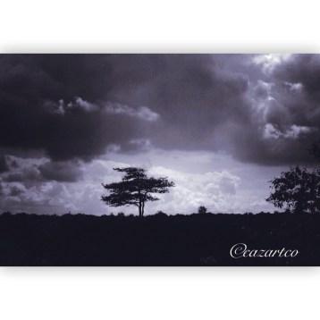 Monday, Monday by Cazartco