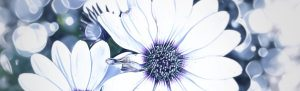 Dreaming of Daisies by cazartco