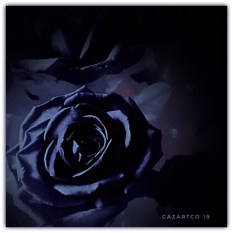 Blue Rose by cazartco