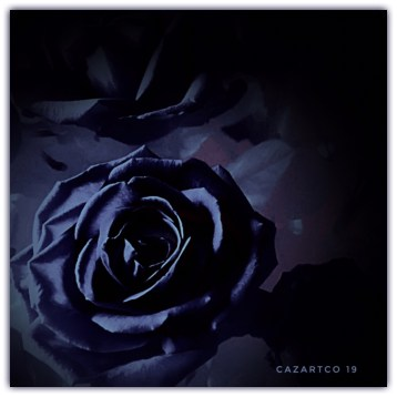 Blue Rose by cazartco