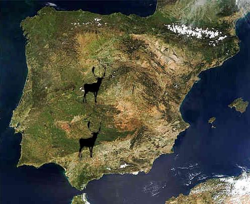 mapa-fallowdeer