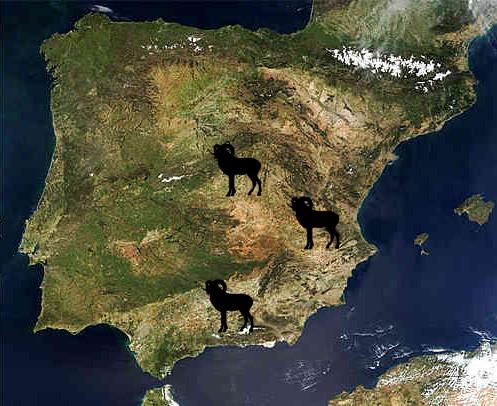 mouflon spain map