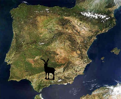 ibex-ronda-map