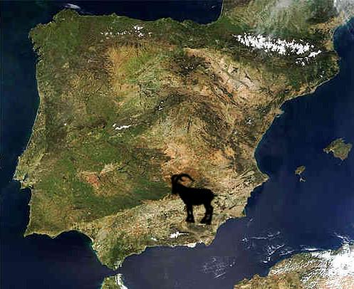 sierra nevada ibex map