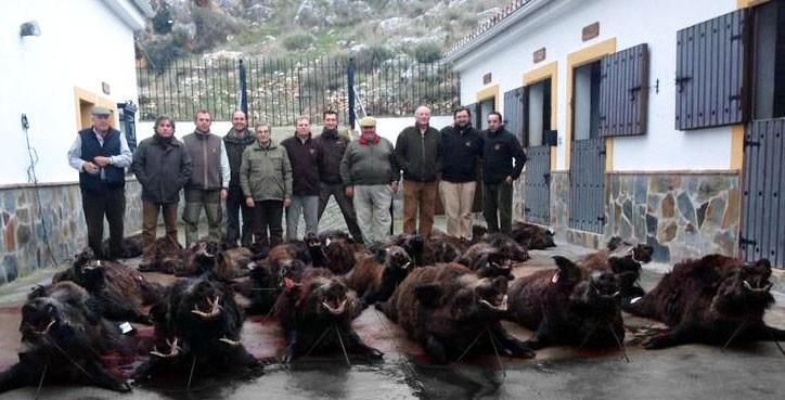 wildboar-group