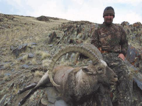 ibex mongolia