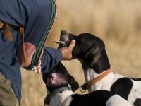 Por que debes asegurar tu perro