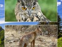 Biodiversidad-caza
