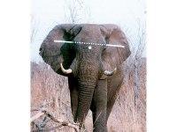 100 Elefantes 100: Colocación del tiro (III)