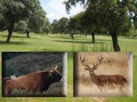 Las cargas ganaderas en las fincas de caza: un asunto sin resolver