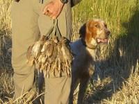 Diez consejos para disfrutar de nuestro perro en estos días de caza en media veda