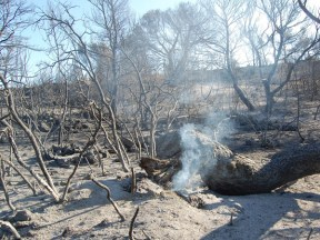 images_wonke_actualidad_20120904_incendios_2