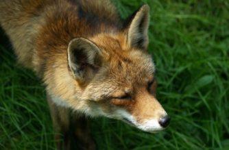 Control de predadores: qué, cómo y cuándo actuar