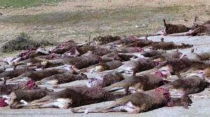 montería veterinarios carne caza plantel canales