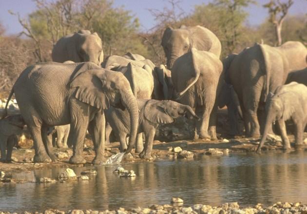 elefantes © SCI