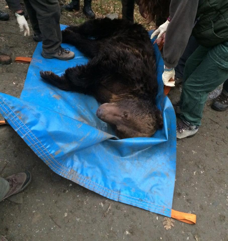 oso muerto fapas palencia