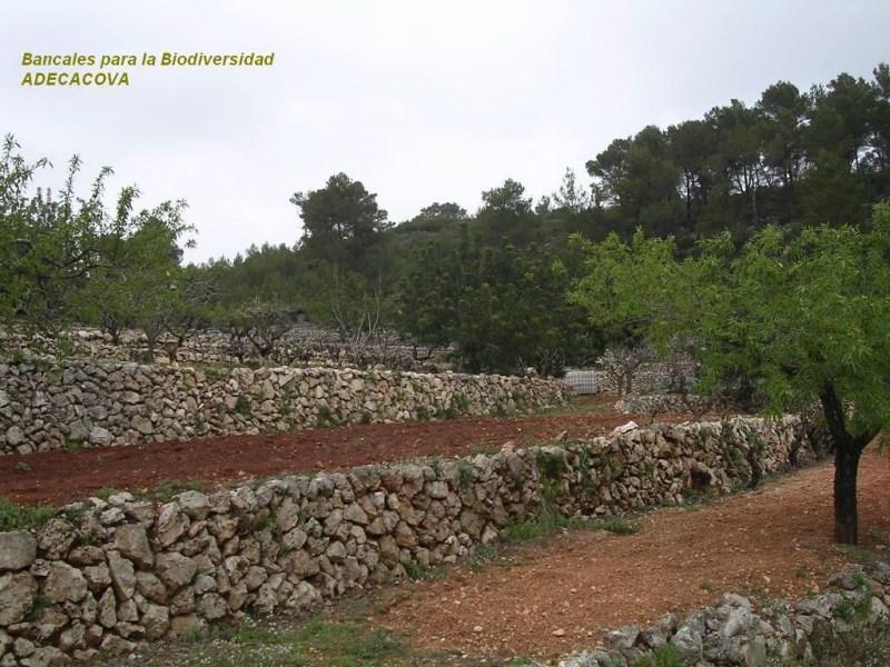 Bancales para la Biodiversidad (ADECACOVA)
