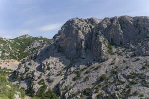 359 - Muflones Libres En Croacia (4)