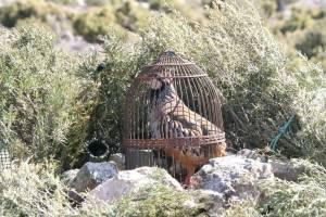 La caza de perdiz con reclamo como Patrimonio de la Humanidad