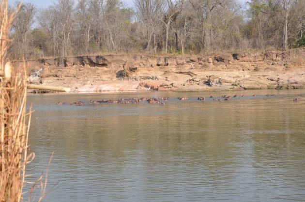 361 - Hipopotamos del Luangwa (17)