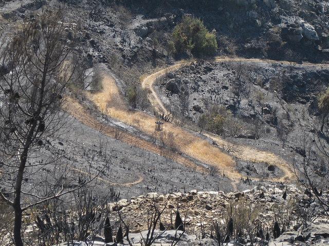 Comedero no quemado en una zona cultivada que se ha salvado del incendio por haber sido trabajada. FCCV