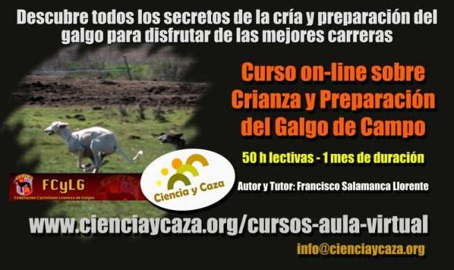curso on line galgos