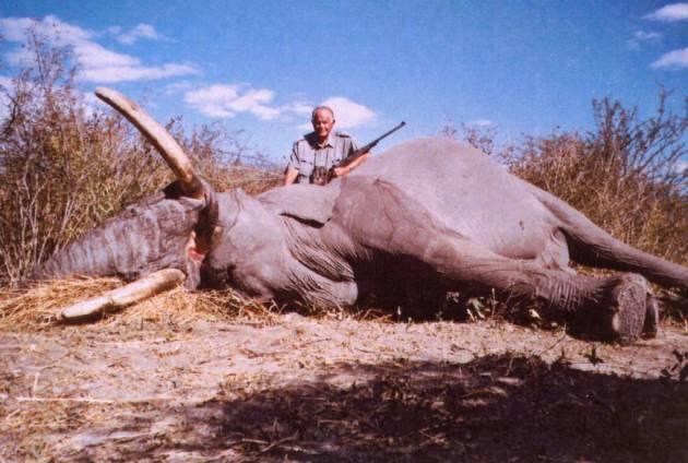 quinto elefante