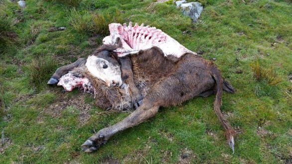 Daños por Lobos