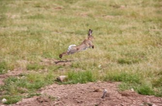 Conejo y liebre: ¿cómo se presenta la temporada de caza 2016/2017?