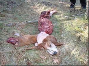 Daños por lobos perro