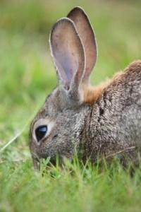 conejo En portada. Riesgos Innecesarios. Conejo