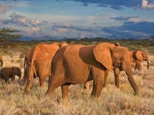 elefantes de Angola