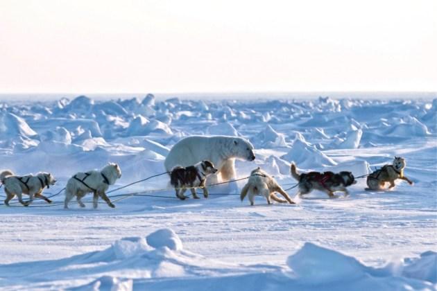 En los territorios  de nanook Resolute, Nunavut, Canadá por John Sauro