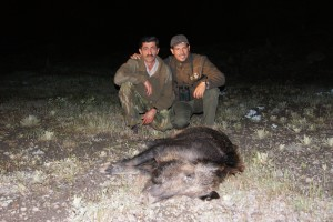 Caza en turquía 'Ronda turca' a los jabalíes