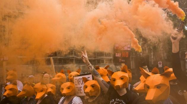 PROTESCA CAZA ZORRO