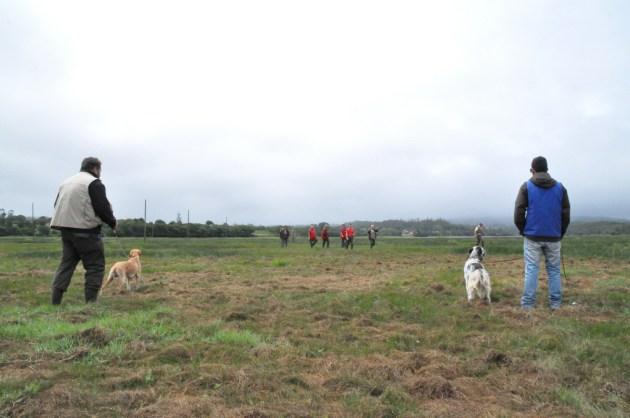 caza práctica perros galicia