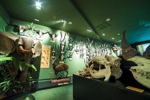 museo-de-la-caza-los-yebenes_7681523