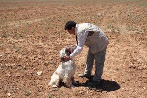 Curso Adiestramiento Perros de Caza FCCV cobro pieza