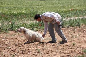 Curso Adiestramiento Perros de Caza FCCV