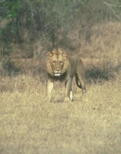 leon macho copy SCI
