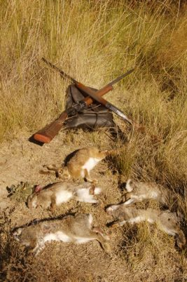 percha conejos liebre