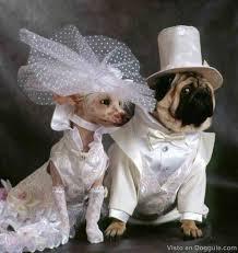 perros boda