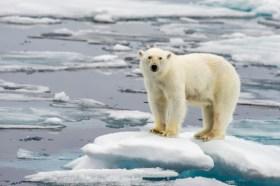 shutterstock_oso-polar