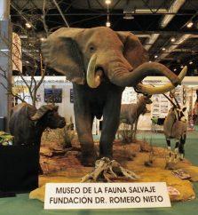elefante-taxidermia