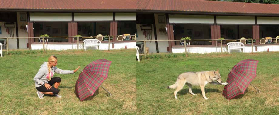 La investigadora Claudia Fugazza y su perro en una demostración simple del experimento. / Mirko Lui.