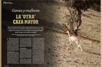En portada. Gamos y muflones, la 'otra' caza mayor