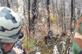 Cacería del borrego Dall en Alaska (III)