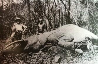 Lefebvre con un elefante cazado en la zona de Marali, Ubangui-chari, en 1920.