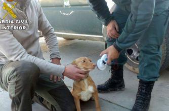 Recuperados 29 perros sustraídos durante la temporada de caza