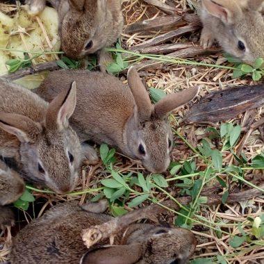 50000 conejos
